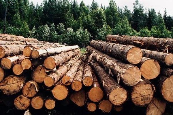 Кругляк- это спиленное дерево